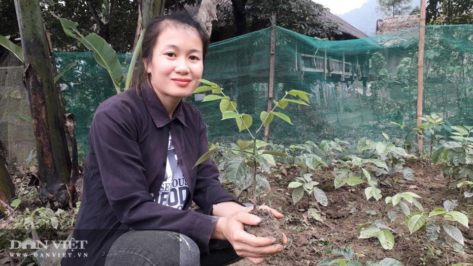 Yên Bái: Lạ trồng thứ cây cứ động vào là thơm nức mũi, bán cả lá cả cây nhiều hàng ăn thi nhau hỏi mua - Ảnh 1.