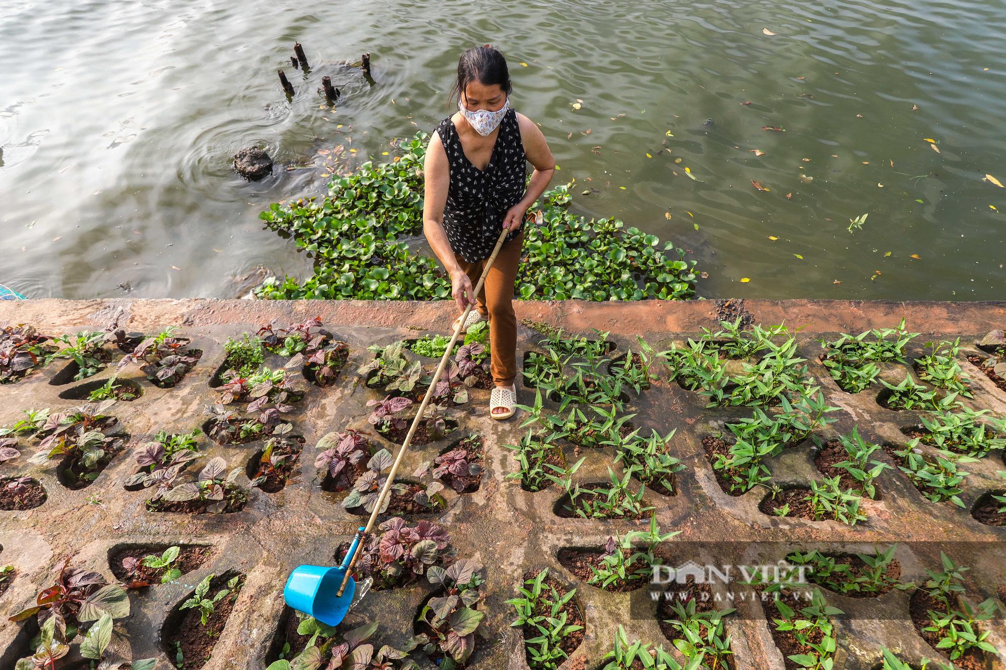 Độc đáo mô hình trồng rau hốc đá ven hồ ở Hà Nội - Ảnh 2.