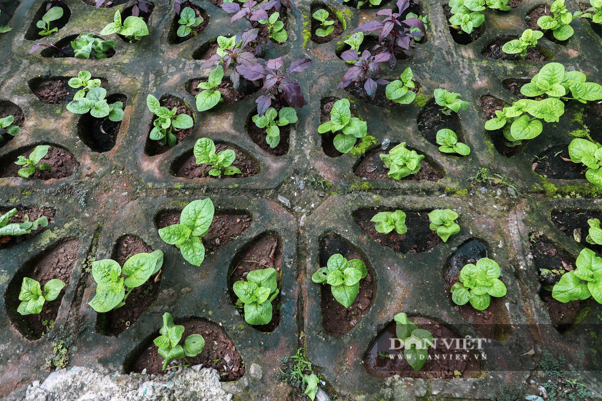 Độc đáo mô hình trồng rau hốc đá ven hồ ở Hà Nội - Ảnh 4.
