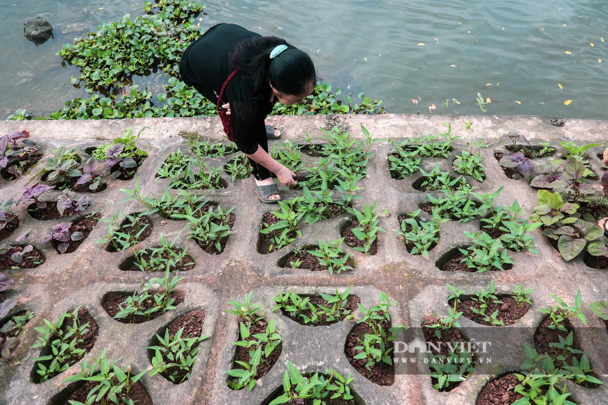 Độc đáo mô hình trồng rau hốc đá ven hồ ở Hà Nội - Ảnh 6.