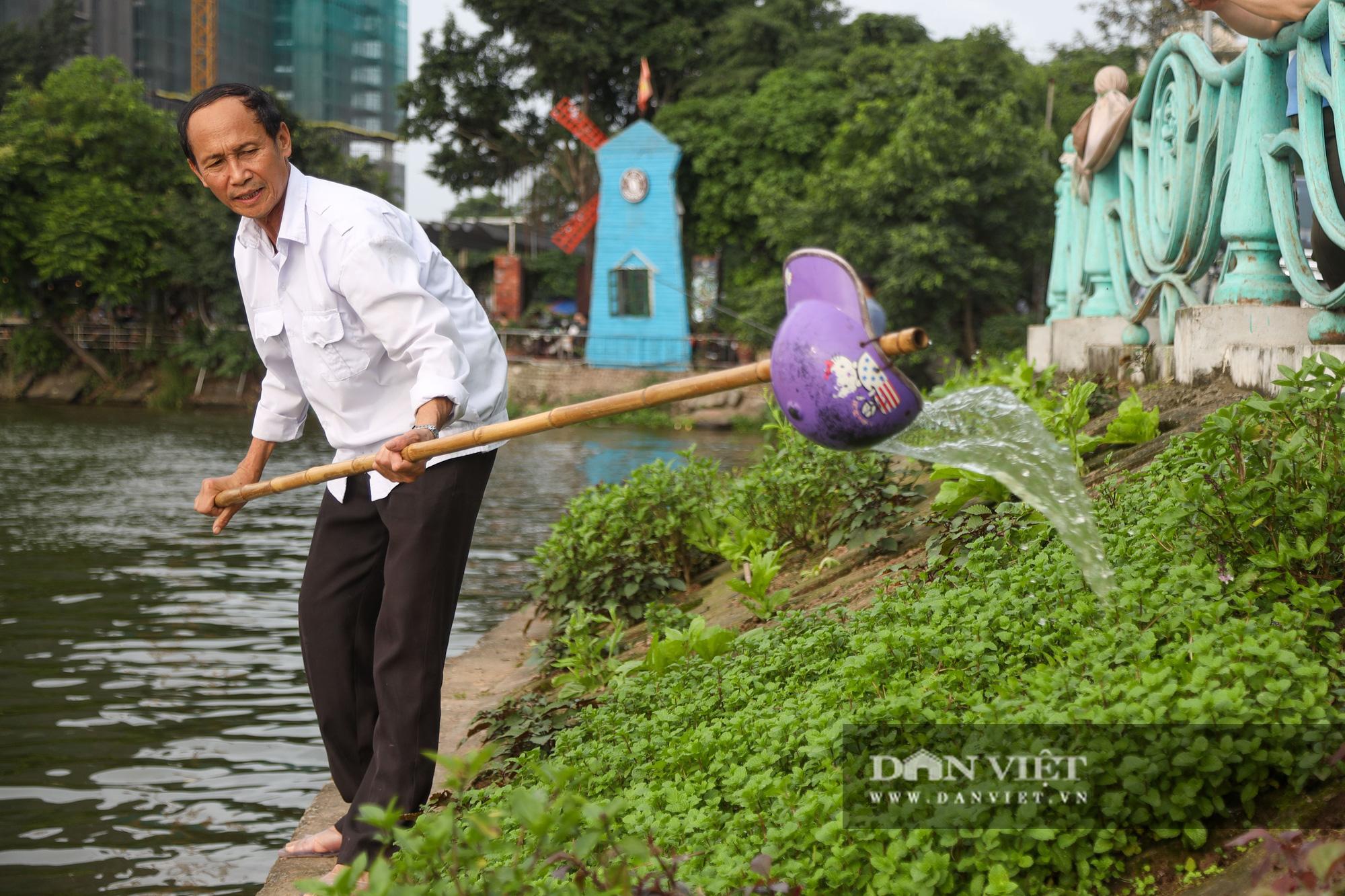 Độc đáo mô hình trồng rau hốc đá ven hồ ở Hà Nội - Ảnh 8.