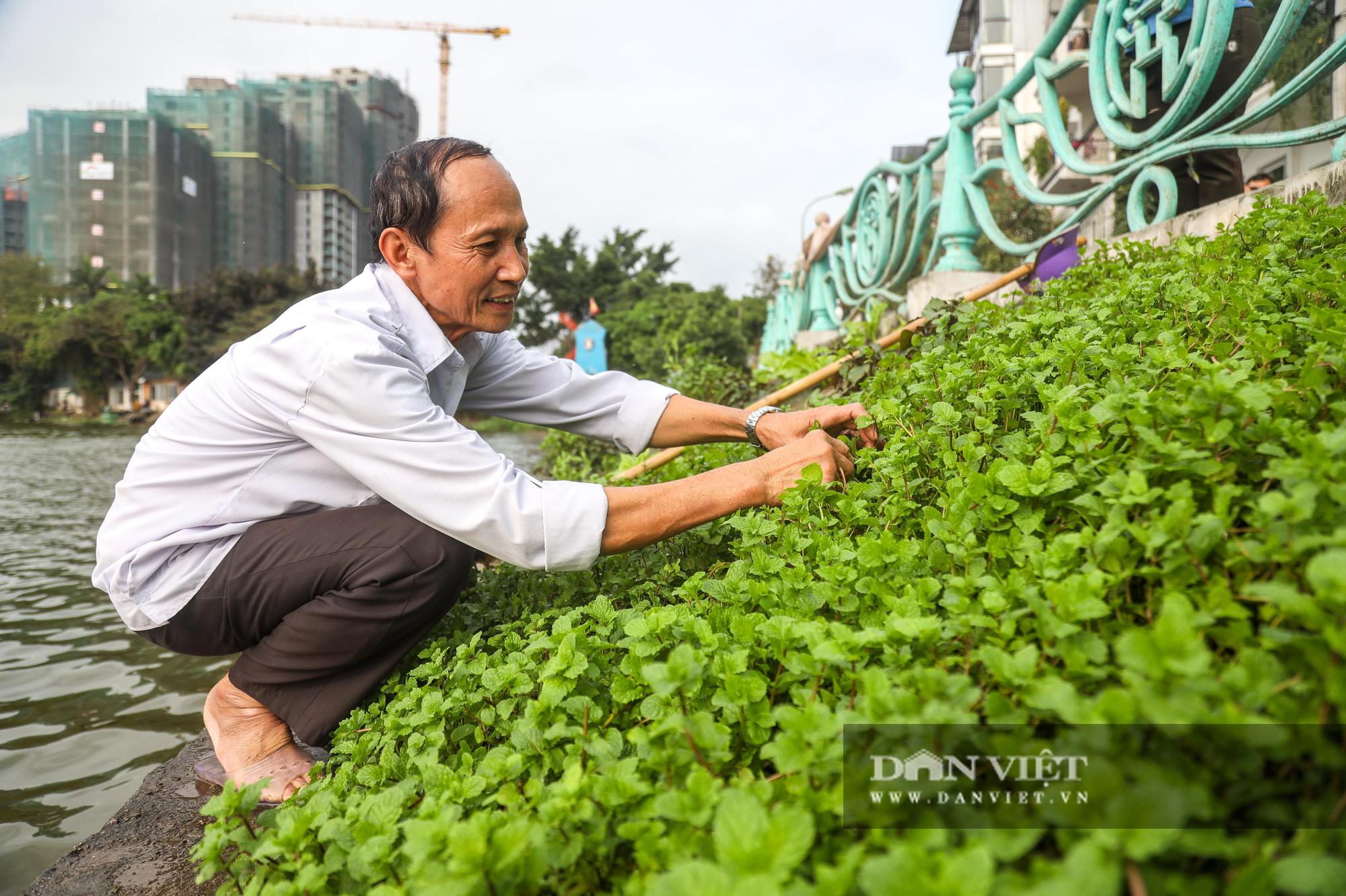 Độc đáo mô hình trồng rau hốc đá ven hồ ở Hà Nội - Ảnh 10.