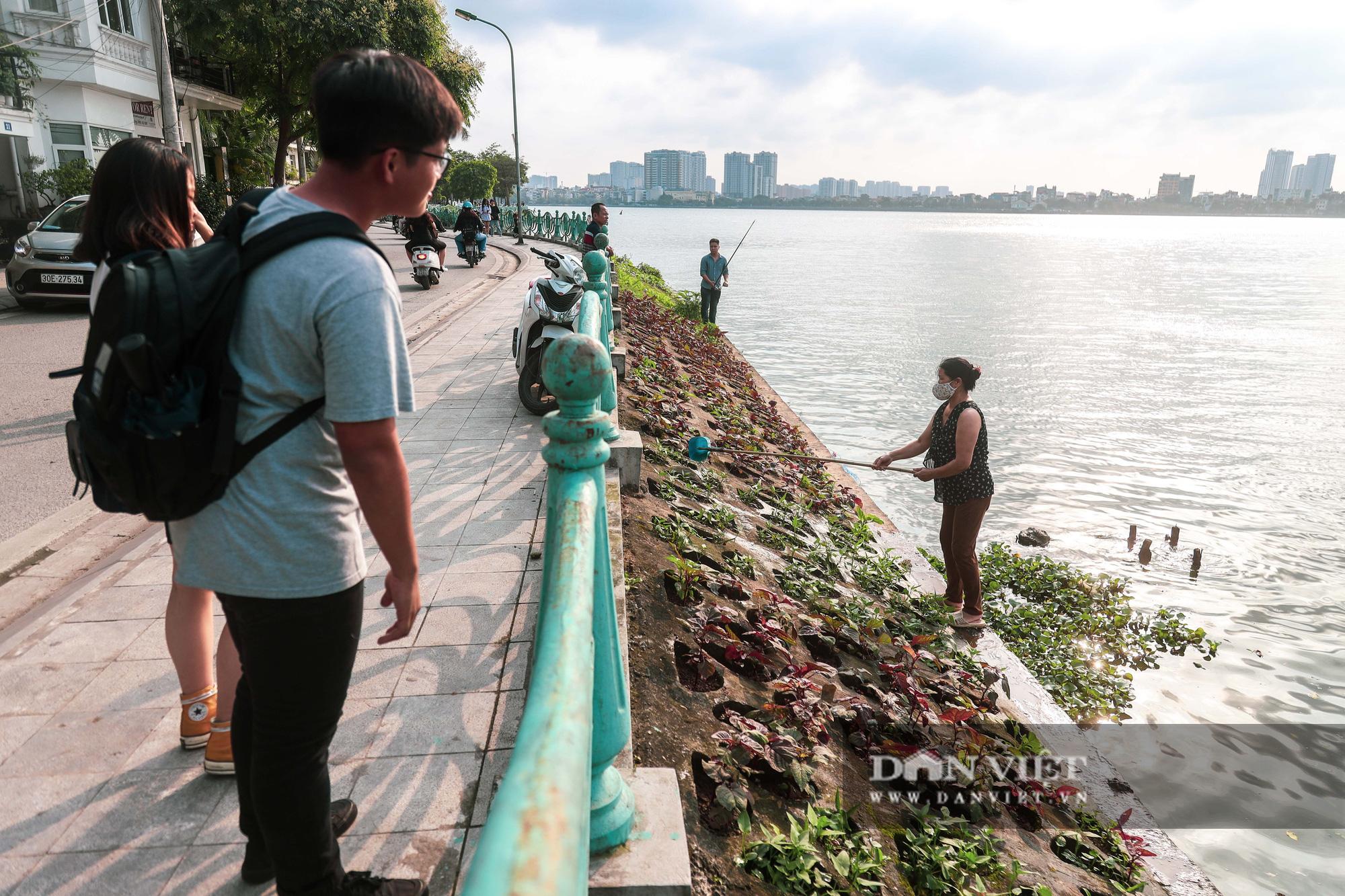 Độc đáo mô hình trồng rau hốc đá ven hồ ở Hà Nội - Ảnh 12.