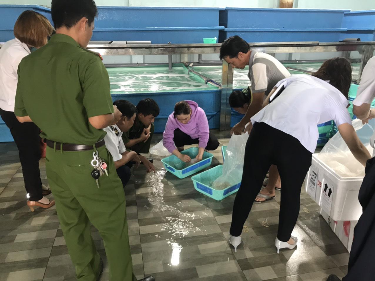 Khánh Hòa: Phạt cơ sở cung cấp tôm hùm giống 15 triệu đồng - Ảnh 1.