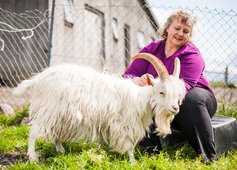 Gặp gỡ người phụ nữ đã cứu loài dê Iceland thoát khỏi bờ vực tuyệt chủng - Ảnh 2.