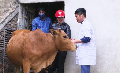 Lên Facebook đăng tin hạn chế ăn thịt trâu bò do bệnh viêm da nổi cục, coi chừng bị phạt tiền - Ảnh 2.