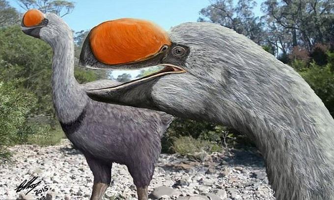 Bí ẩn về loài chim đi bộ lớn nhất thế giới từng tồn tại nặng bằng một con bò  - Ảnh 1.