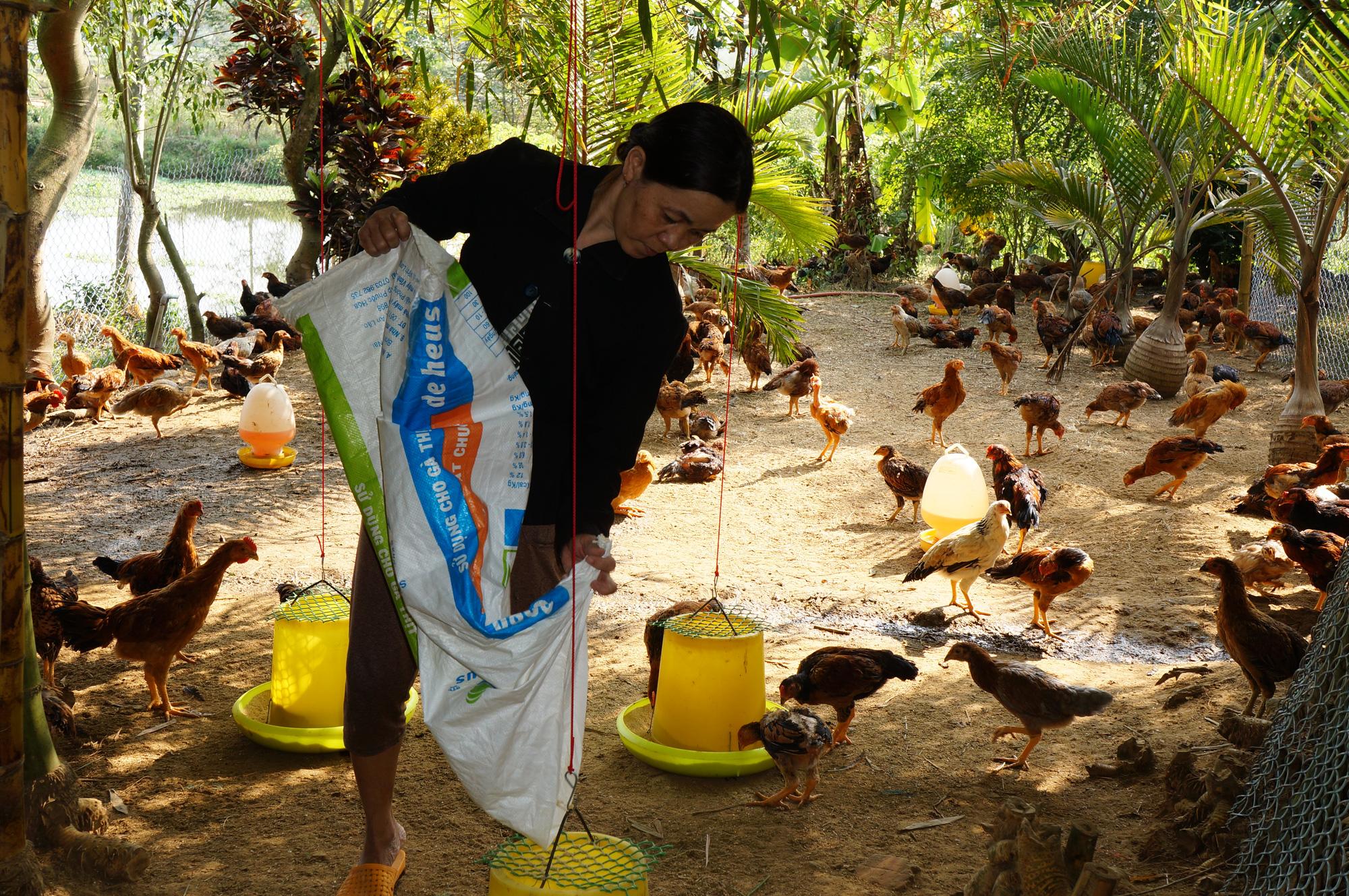 Quảng Nam: Những địa phương nào bị nghiêm cấm chăn nuôi trong nội thành? - Ảnh 1.