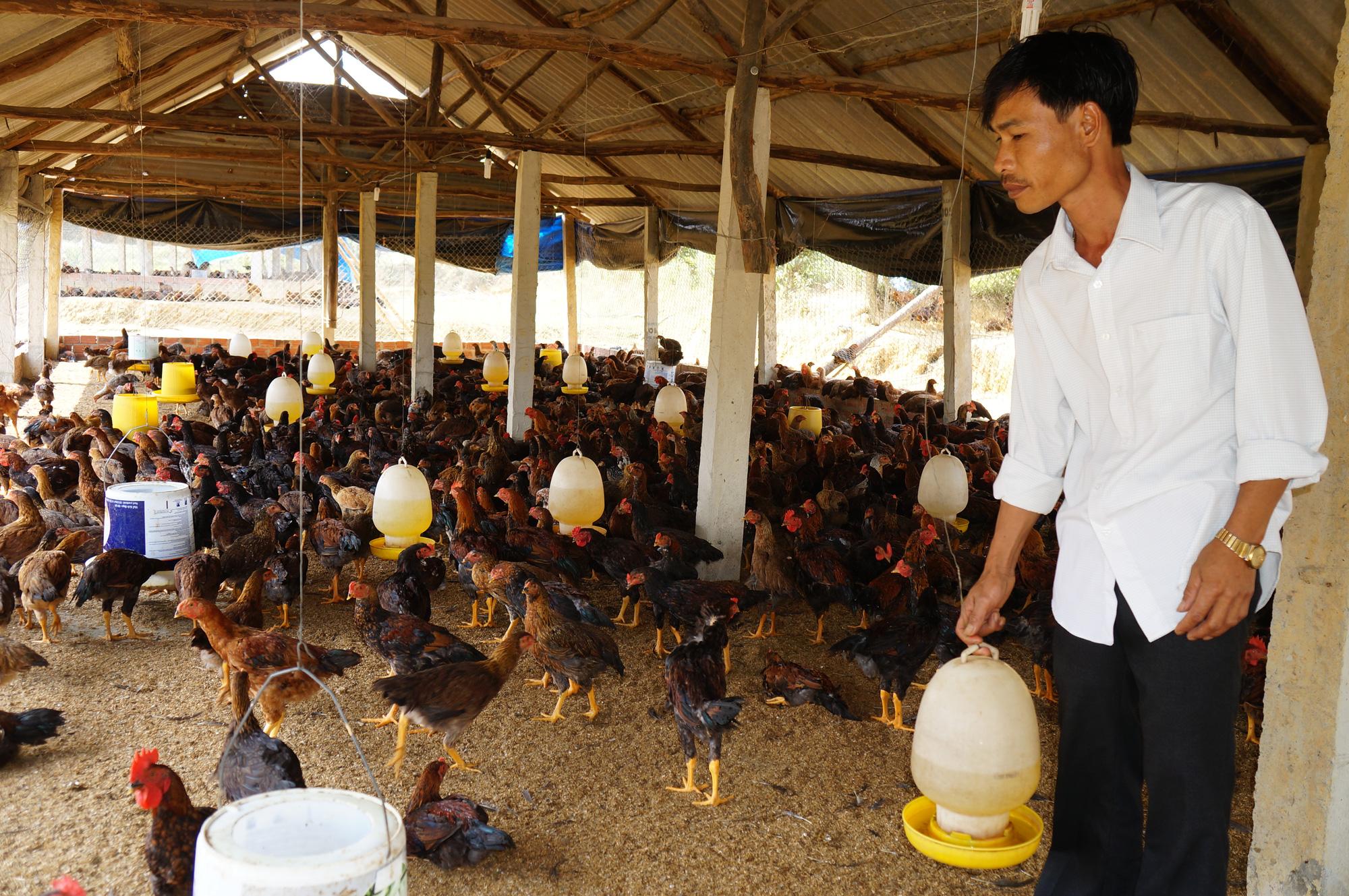 Quảng Nam: Những địa phương nào bị nghiêm cấm chăn nuôi trong nội thành? - Ảnh 5.
