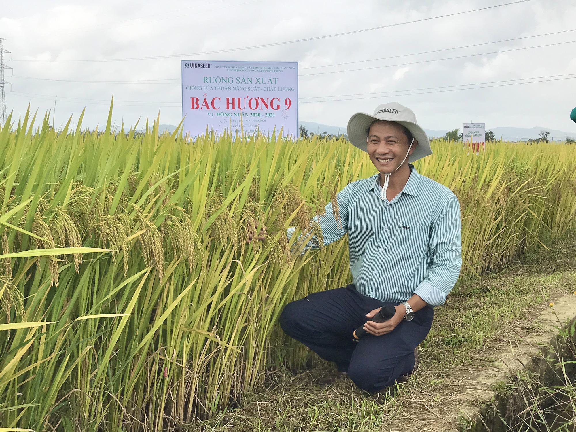 Quảng Nam: Bất ngờ với hai giống lúa mới năng suất cao, chất lượng tốt và chống chịu thời tiết khắc nghiệt - Ảnh 4.