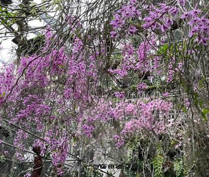Vũ Tài Anh người con Bắc Ninh và tình yêu hoa lan tĩnh lặng - Ảnh 2.