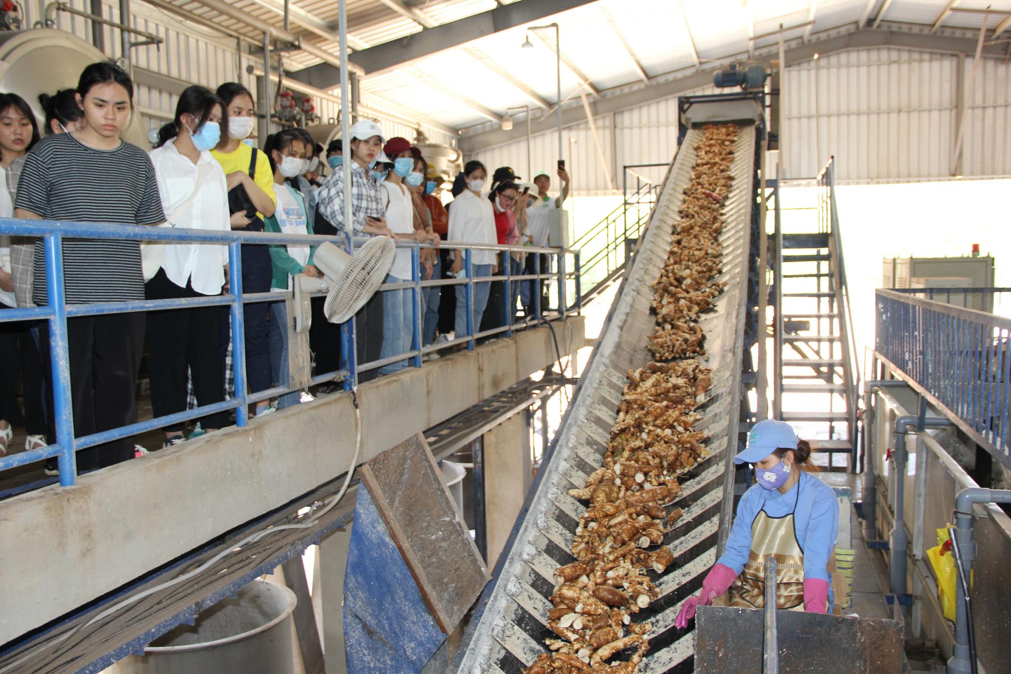 Khám phá tour du lịch học tập chỉ với 250.000 đồng ở Quảng Trị - Ảnh 6.