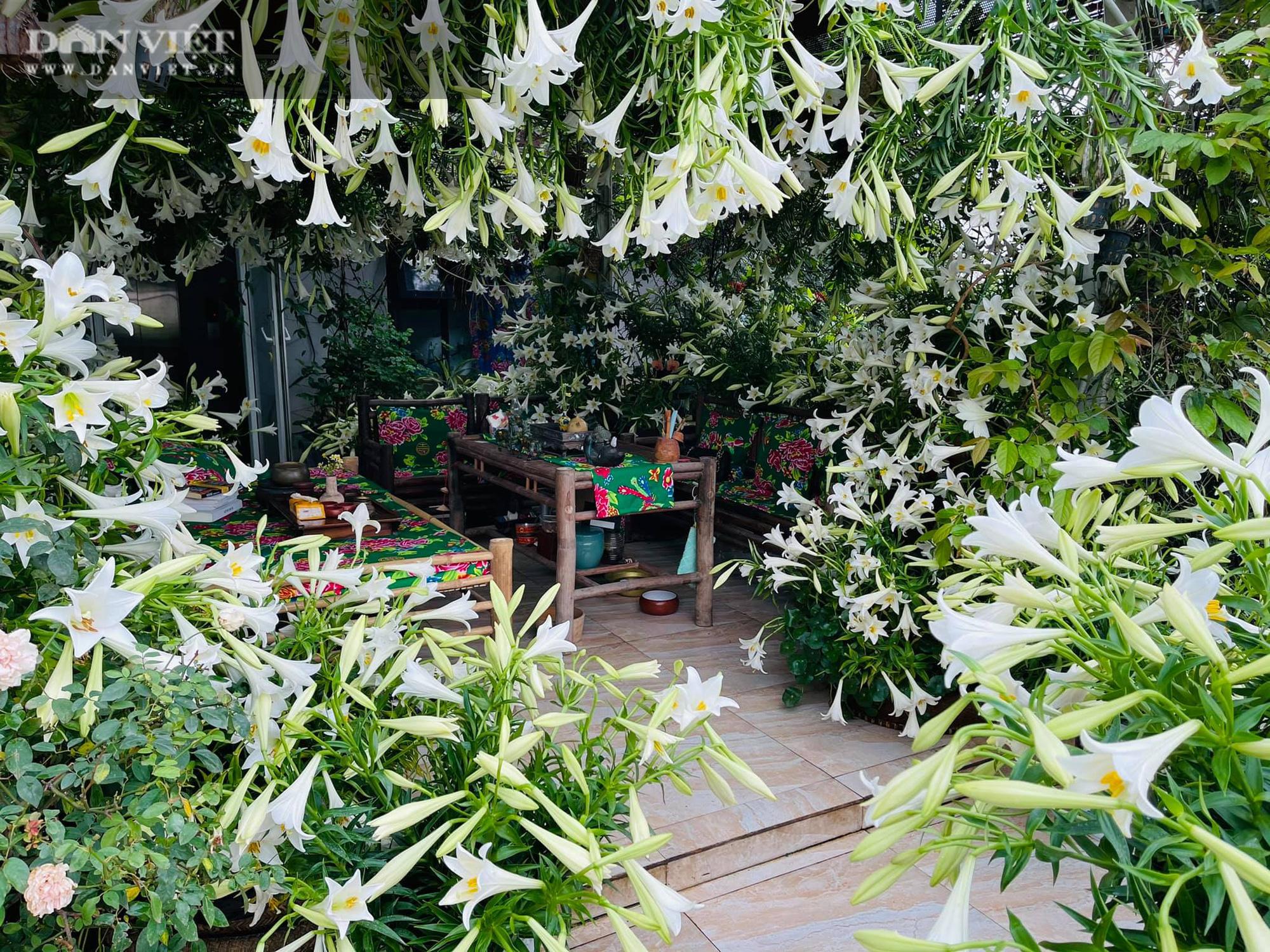 """Choáng ngợp trước sân thượng """"phủ trắng"""" 3500 bông hoa loa kèn"""