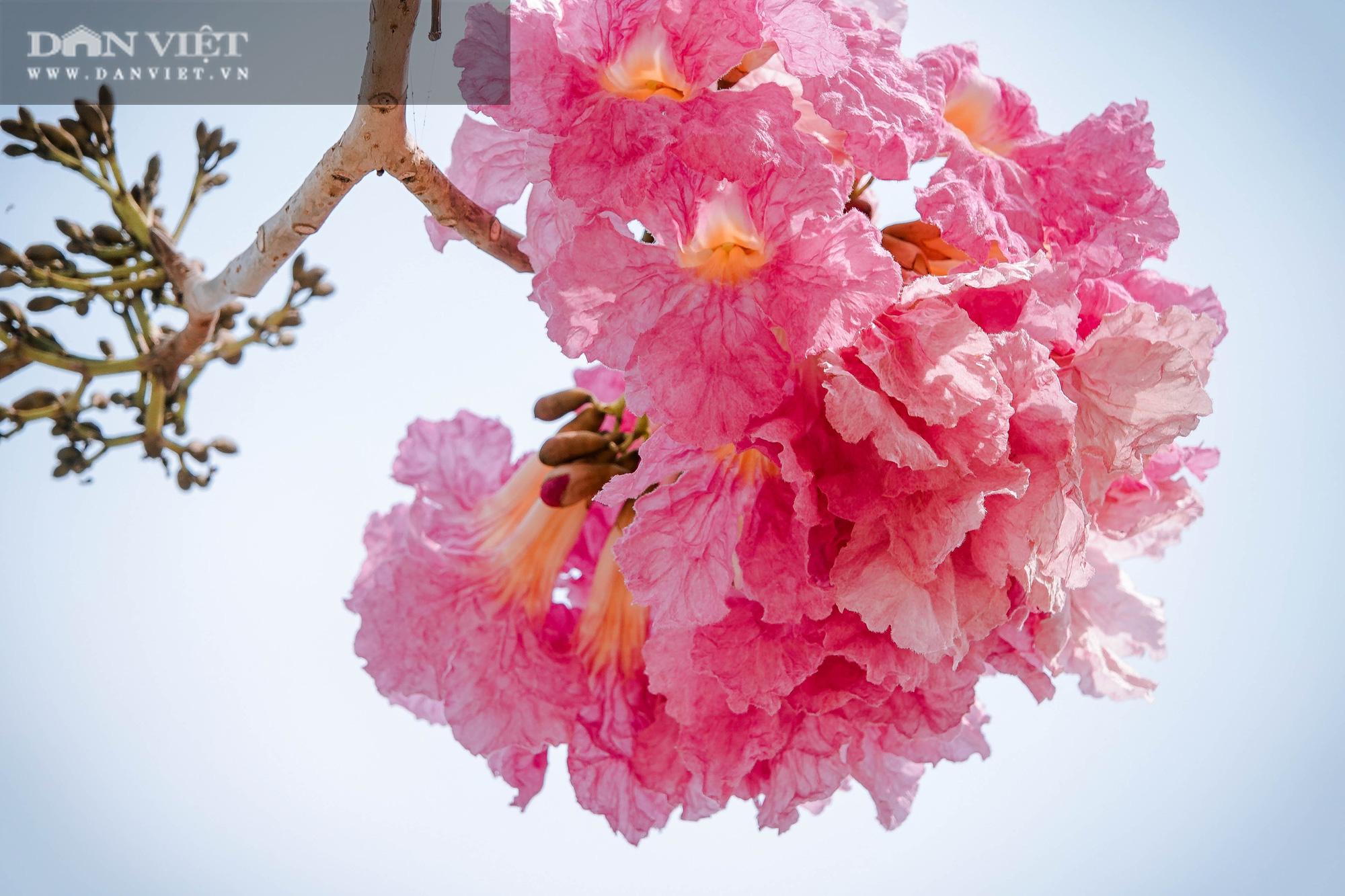 Giới trẻ đổ xô check in tại con đường hoa kèn hồng đẹp như phim Hàn Quốc ở miền Tây - Ảnh 8.