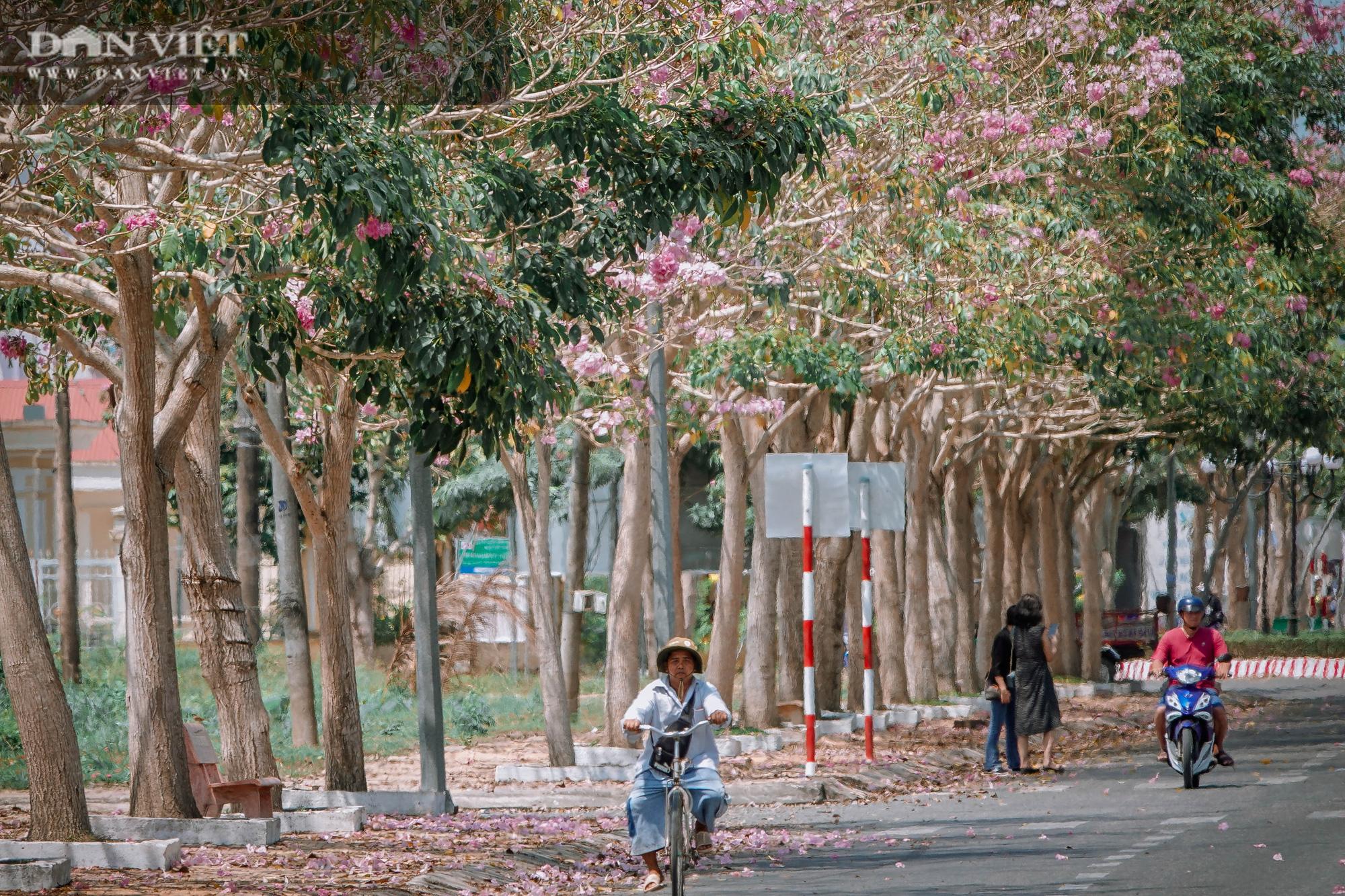 Giới trẻ đổ xô check in tại con đường hoa kèn hồng đẹp như phim Hàn Quốc ở miền Tây - Ảnh 3.