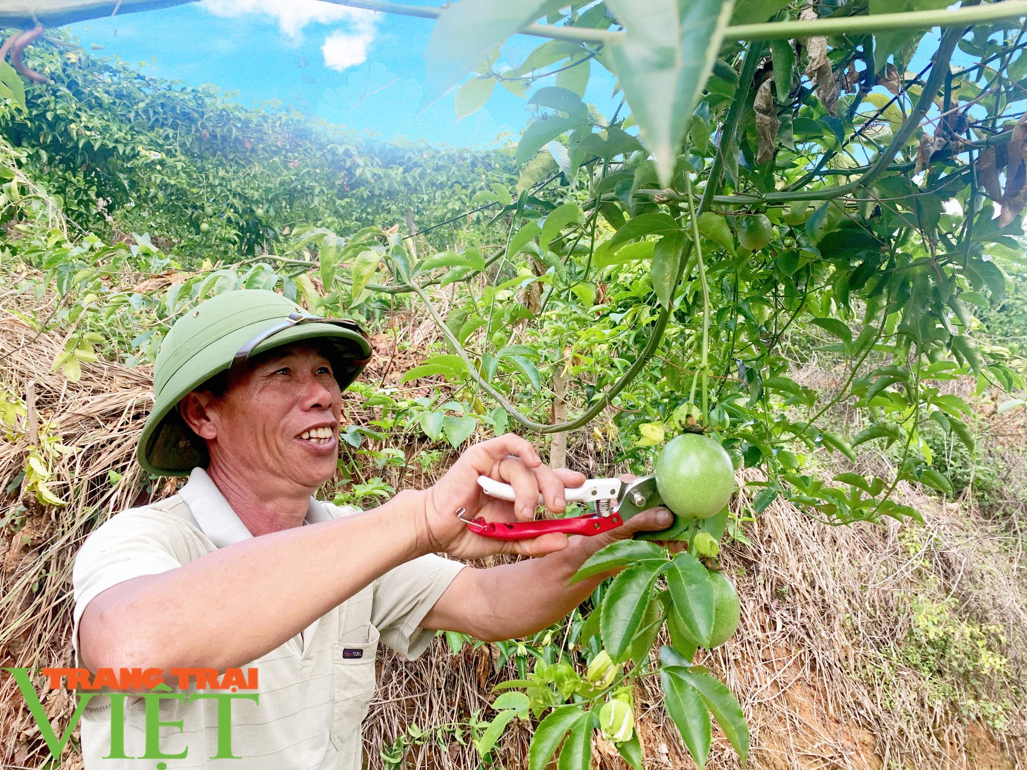 Trồng chanh dây hữu cơ, một nông dân thu nhập khá  - Ảnh 1.