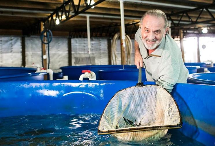 """""""Đột nhập"""" và tìm ra bí mật ở nơi nuôi loài cá làm ra thứ đặc sản thượng hạng hàng trăm triệu/kg - Ảnh 2."""