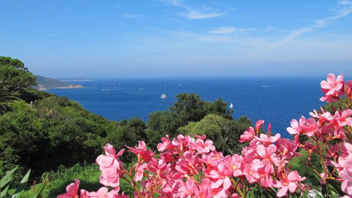Thiên đường bí mật - đảo khỏa thân Le Levant duy nhất ở châu Âu - Ảnh 1.