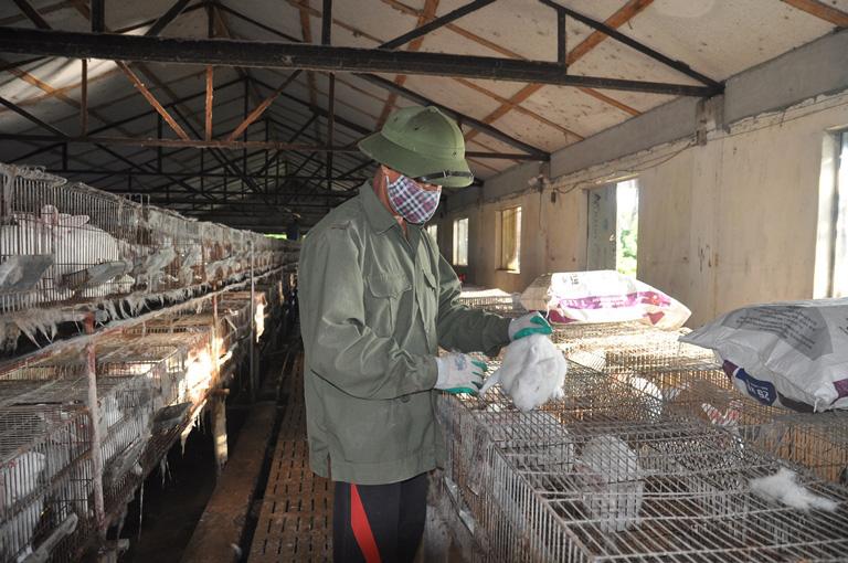 Bắc Ninh: Bỏ nuôi lợn chuyển sang nuôi thỏ ngoại, mỗi tháng ông nông dân bỏ túi 20 triệu đồng - Ảnh 1.