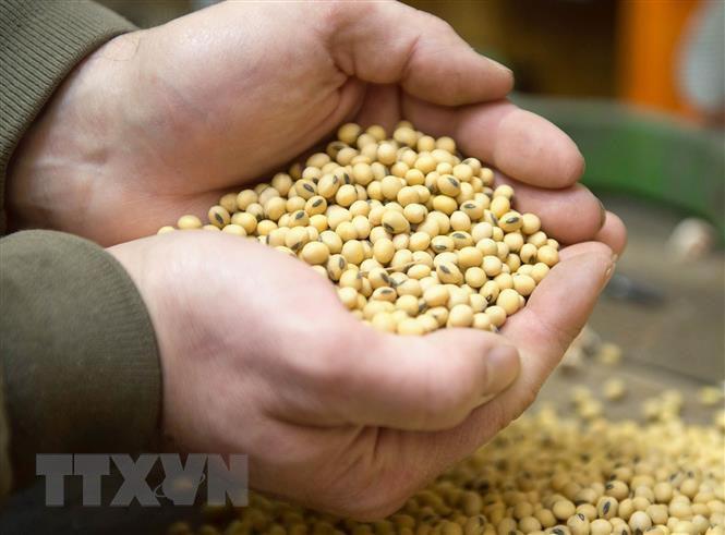 Argentina tiếp tục dẫn đầu thế giới về xuất khẩu bột đậu tương - Ảnh 1.
