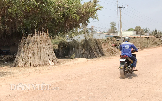 Sở NNPTNT Bình Phước khuyến cáo người dân không mua hom giống khoai mì từ các tỉnh đang bị bệnh khảm lá nặng.