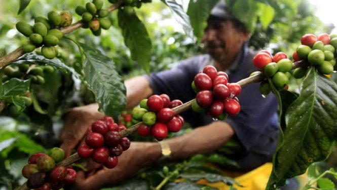 The Coffee House - Mục tiêu phát triển cà phê chất lượng để vươn tầm thế giới - Ảnh 6.