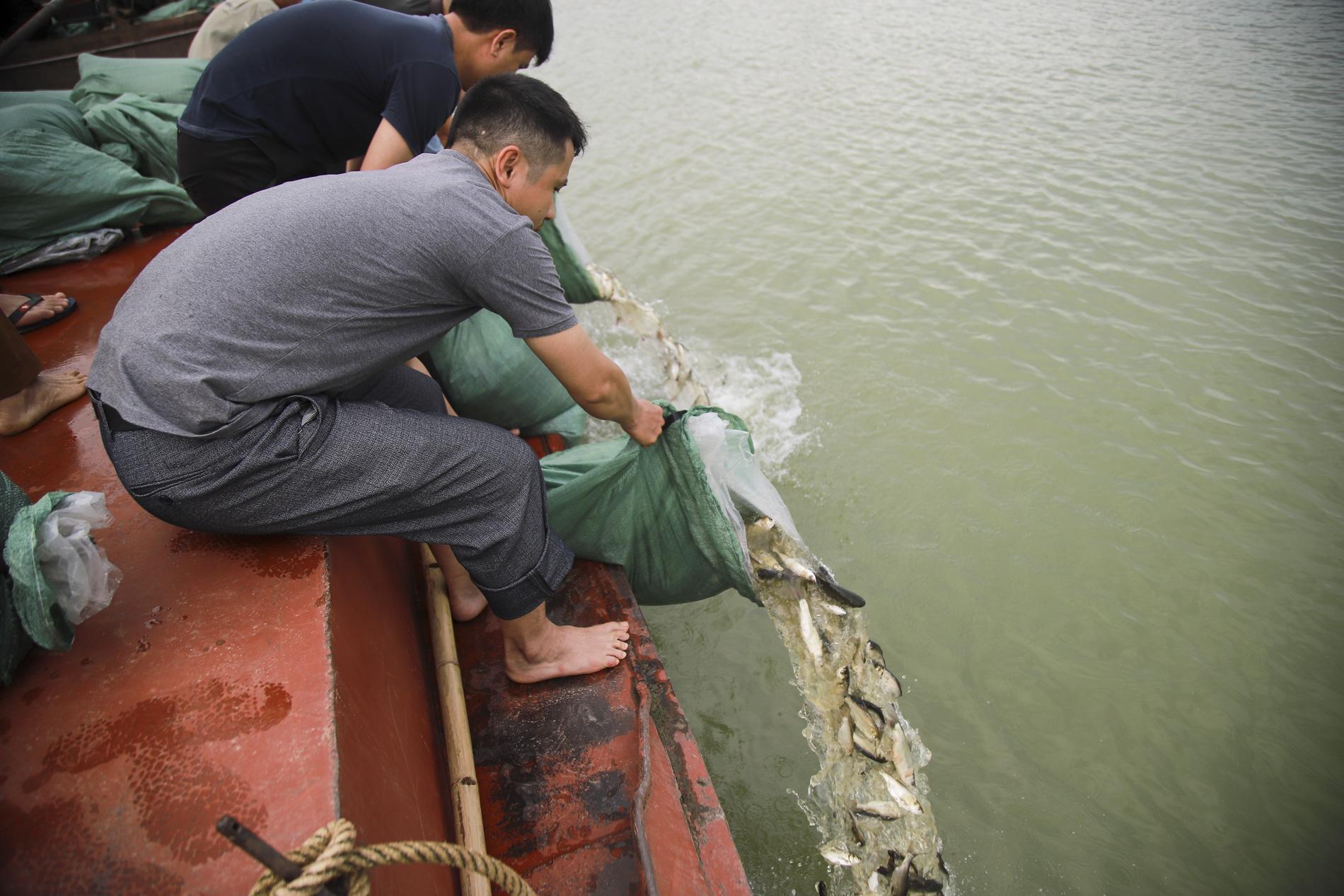 Hơn 10 tấn cá được phóng sinh trên quê hương Bác Hồ - Ảnh 3.