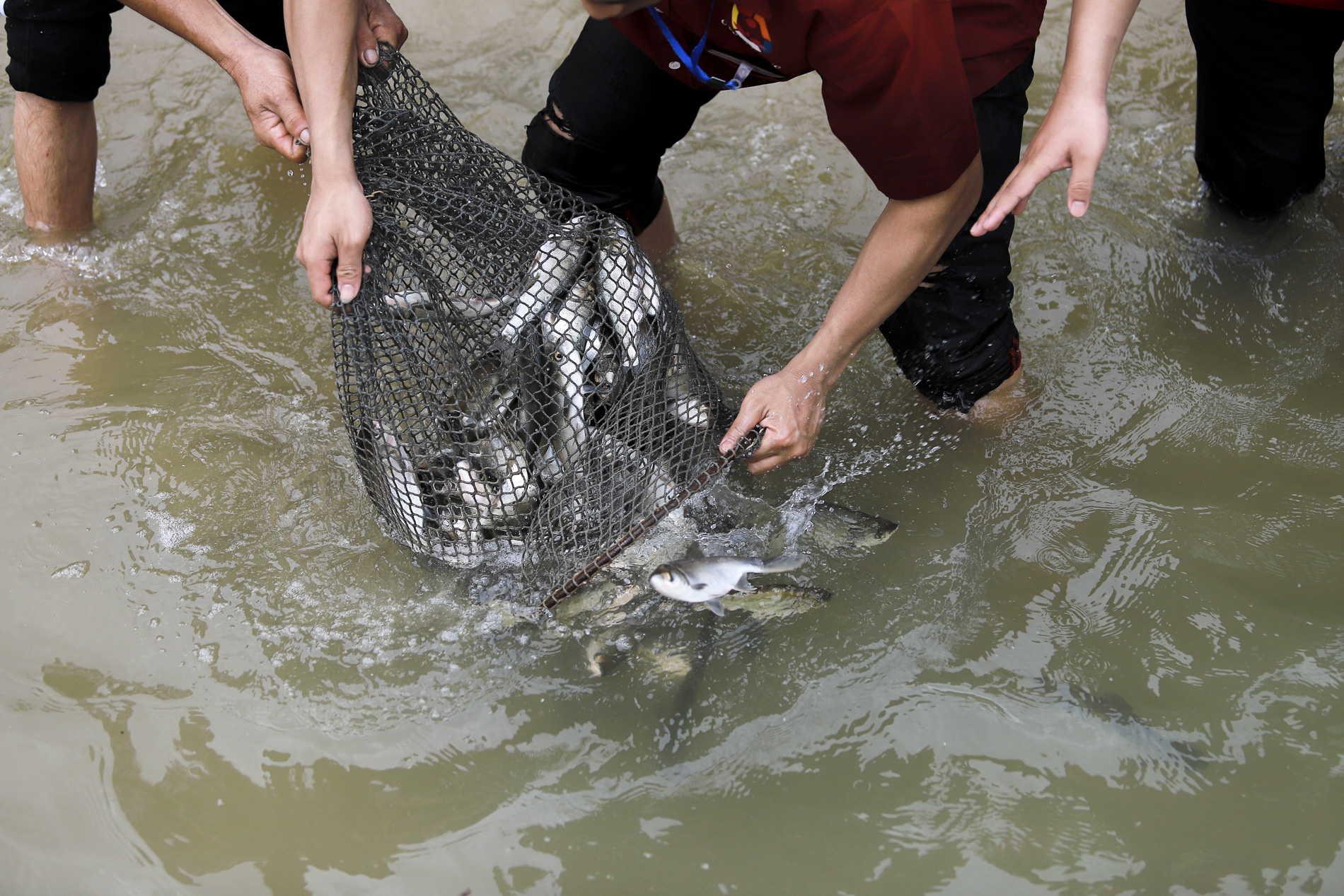 Hơn 10 tấn cá được phóng sinh trên quê hương Bác Hồ - Ảnh 11.