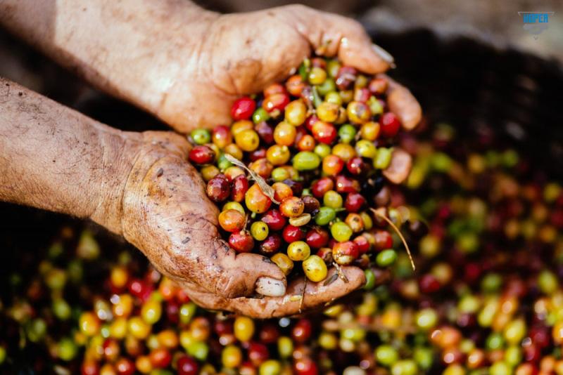The Coffee House - Mục tiêu phát triển cà phê chất lượng để vươn tầm thế giới - Ảnh 5.