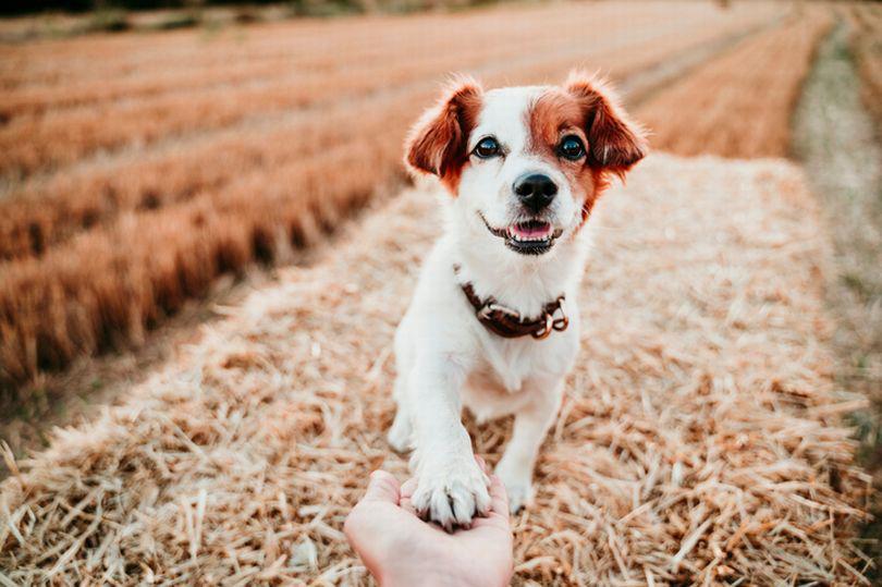 Câu hỏi khiến rất nhiều người đau đầu: Chó thuận chân phải hay chân trái? - Ảnh 1.