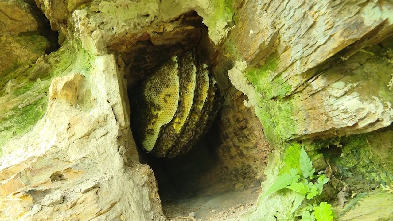 Người dân tộc Mông: Tạo ra mật ngọt từ những hốc đá trên núi cao - Ảnh 4.