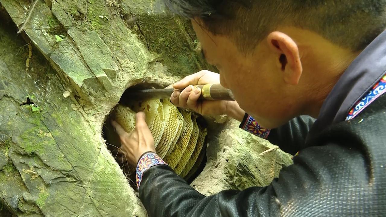 Người dân tộc Mông: Tạo ra mật ngọt từ những hốc đá trên núi cao - Ảnh 3.