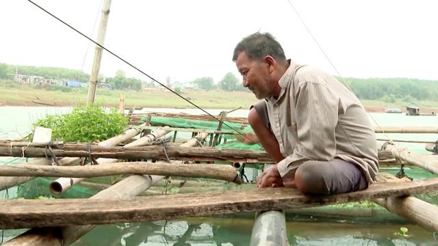 Ông Nguyễn Văn Thâu nuôi cá lồng bè ở lòng hồ thủy điện Thác Mơ