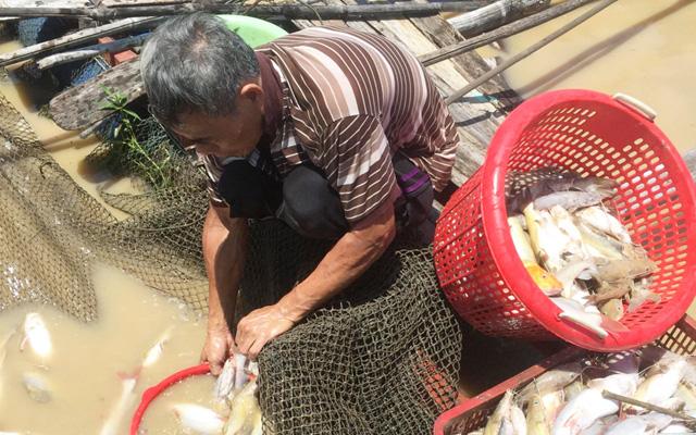 Cá chết trắng trên sông La Ngà năm 2019. Ảnh: Nhật Linh