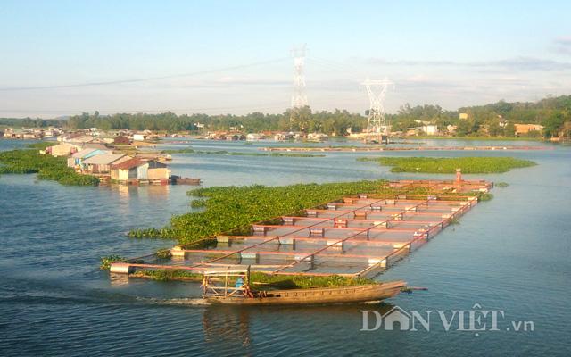Khu vực nuôi cá lồng bè trong hồ Trị An (Đồng Nai) nhìn từ cầu La Ngà