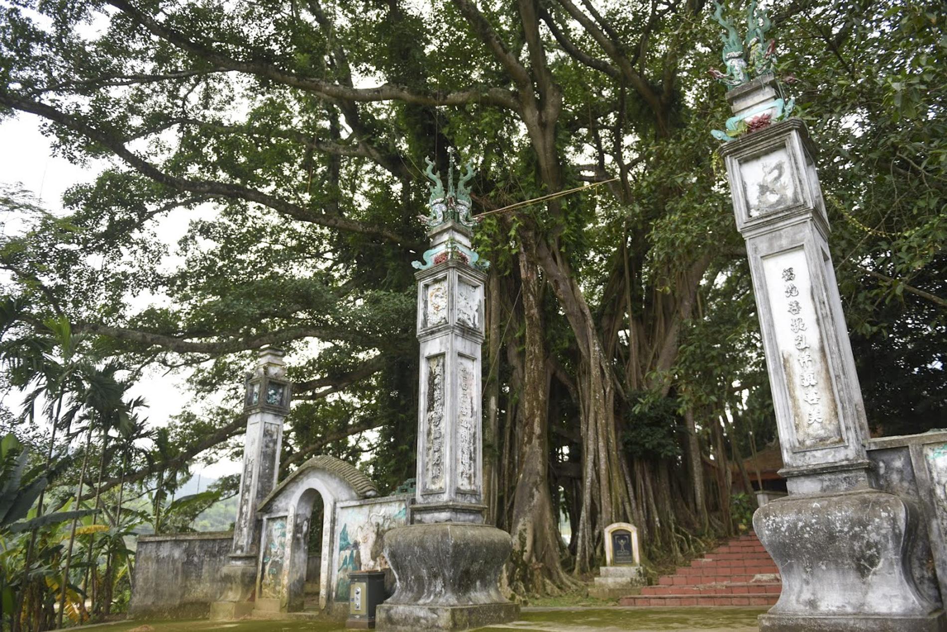 """Chiêm ngưỡng """"báu vật"""" xanh bên đền cổ thờ Tản Viên Sơn Thánh - Ảnh 1."""