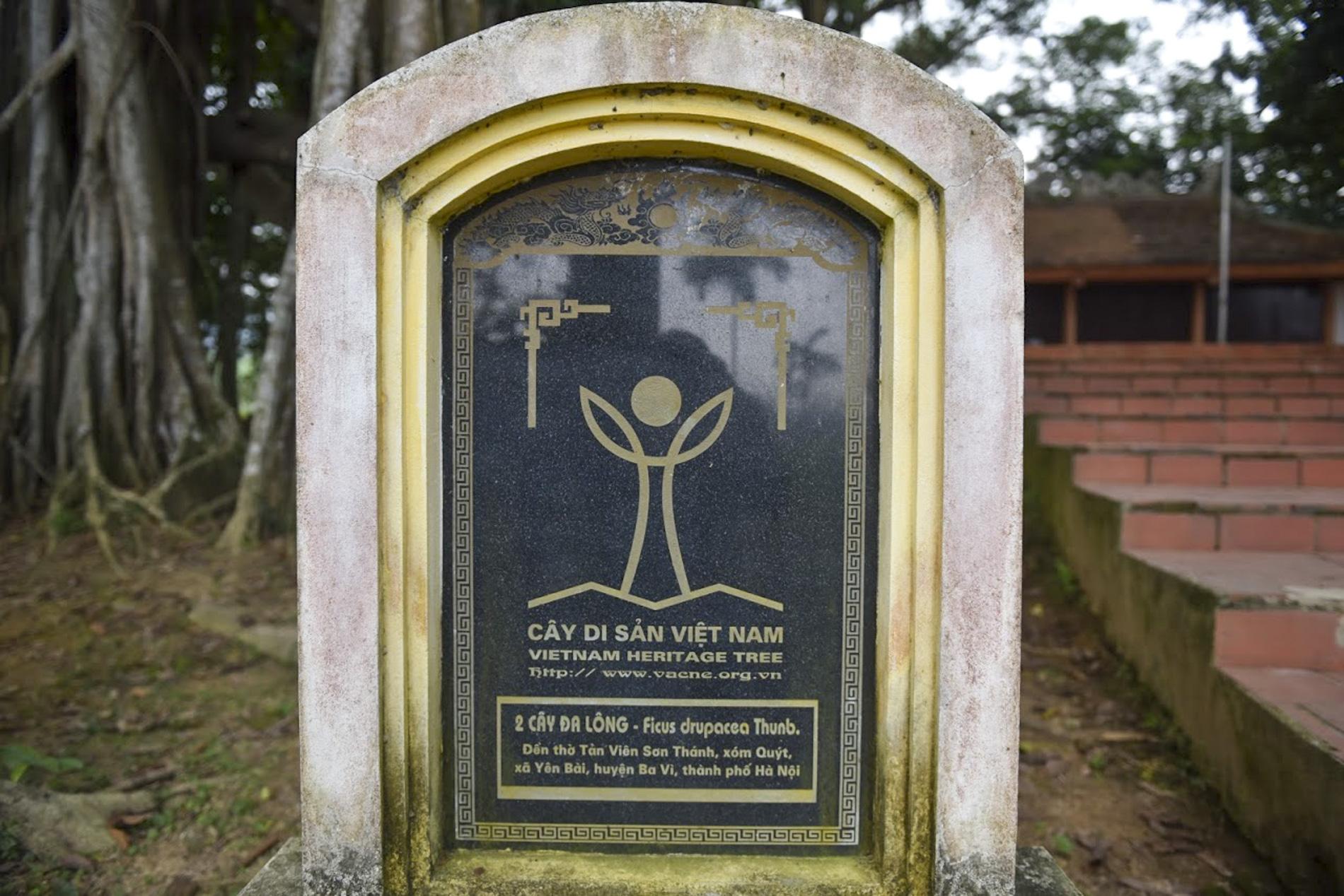 """Chiêm ngưỡng """"báu vật"""" xanh bên đền cổ thờ Tản Viên Sơn Thánh - Ảnh 5."""