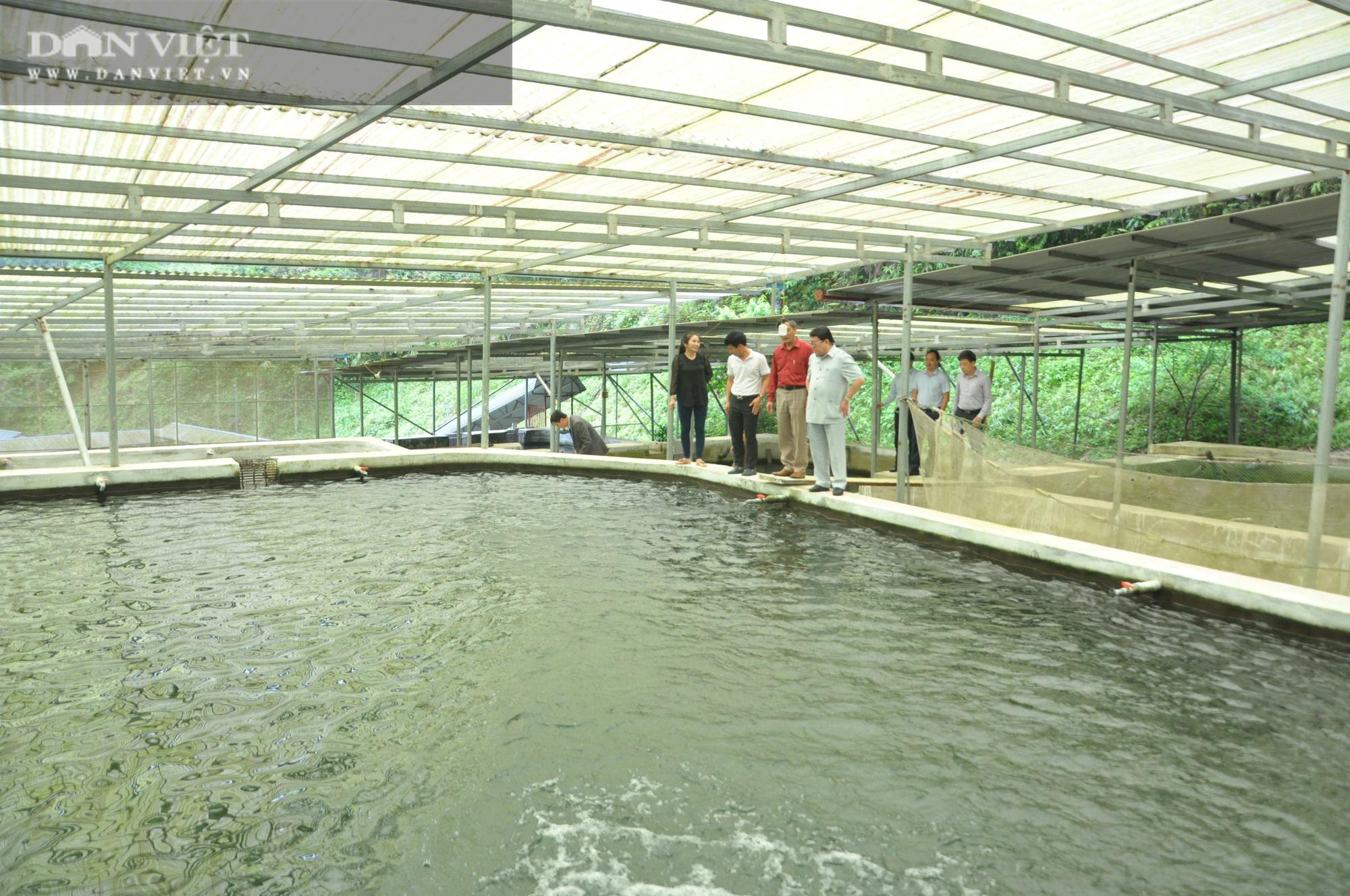 Đại trang trại cá đặc sản trên Cổng Trời mới được Chủ tịch Hội Nông dân Việt Nam có gì đặc biệt? - Ảnh 1.