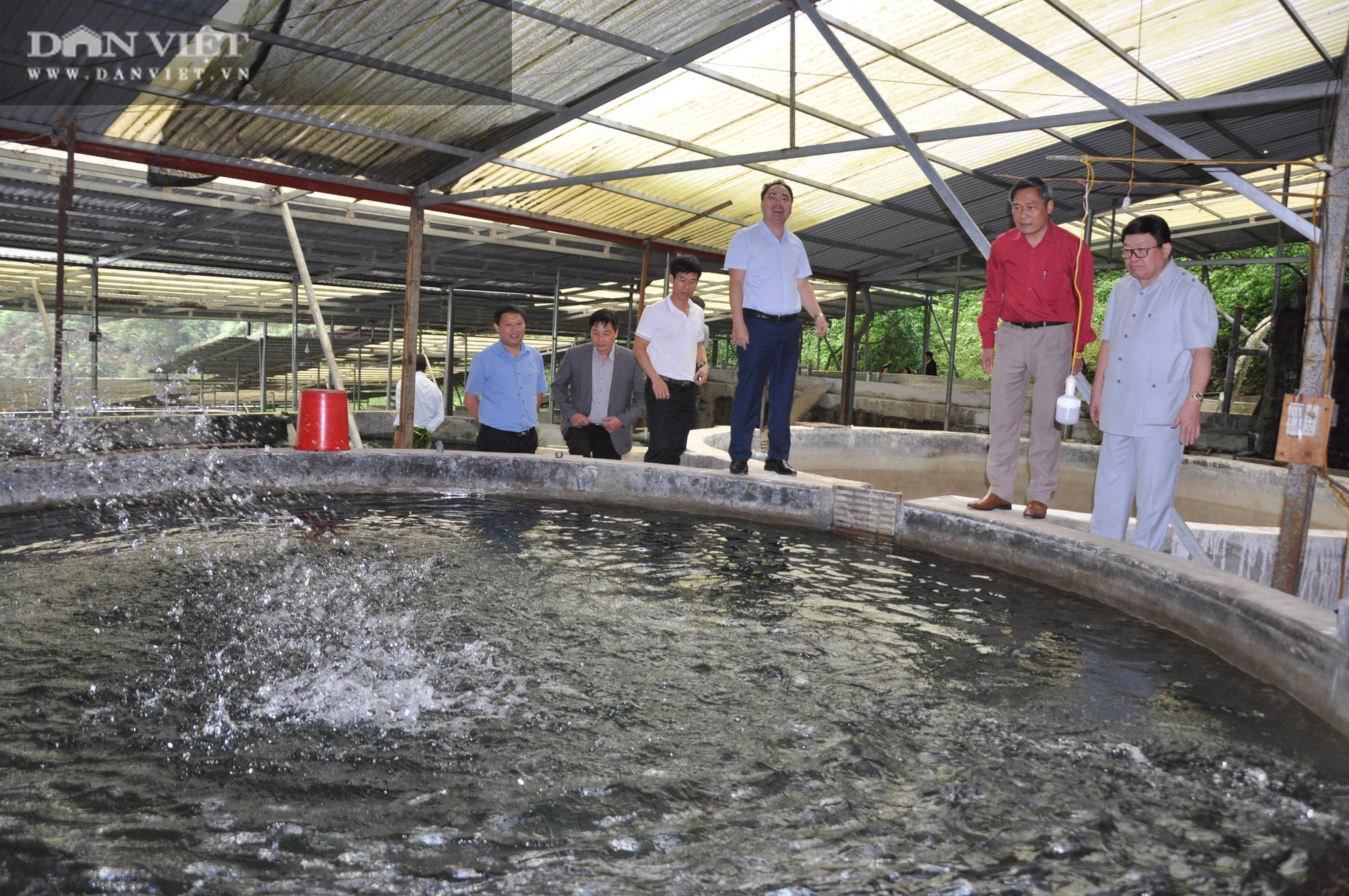 Đại trang trại cá đặc sản trên Cổng Trời mới được Chủ tịch Hội Nông dân Việt Nam có gì đặc biệt? - Ảnh 2.