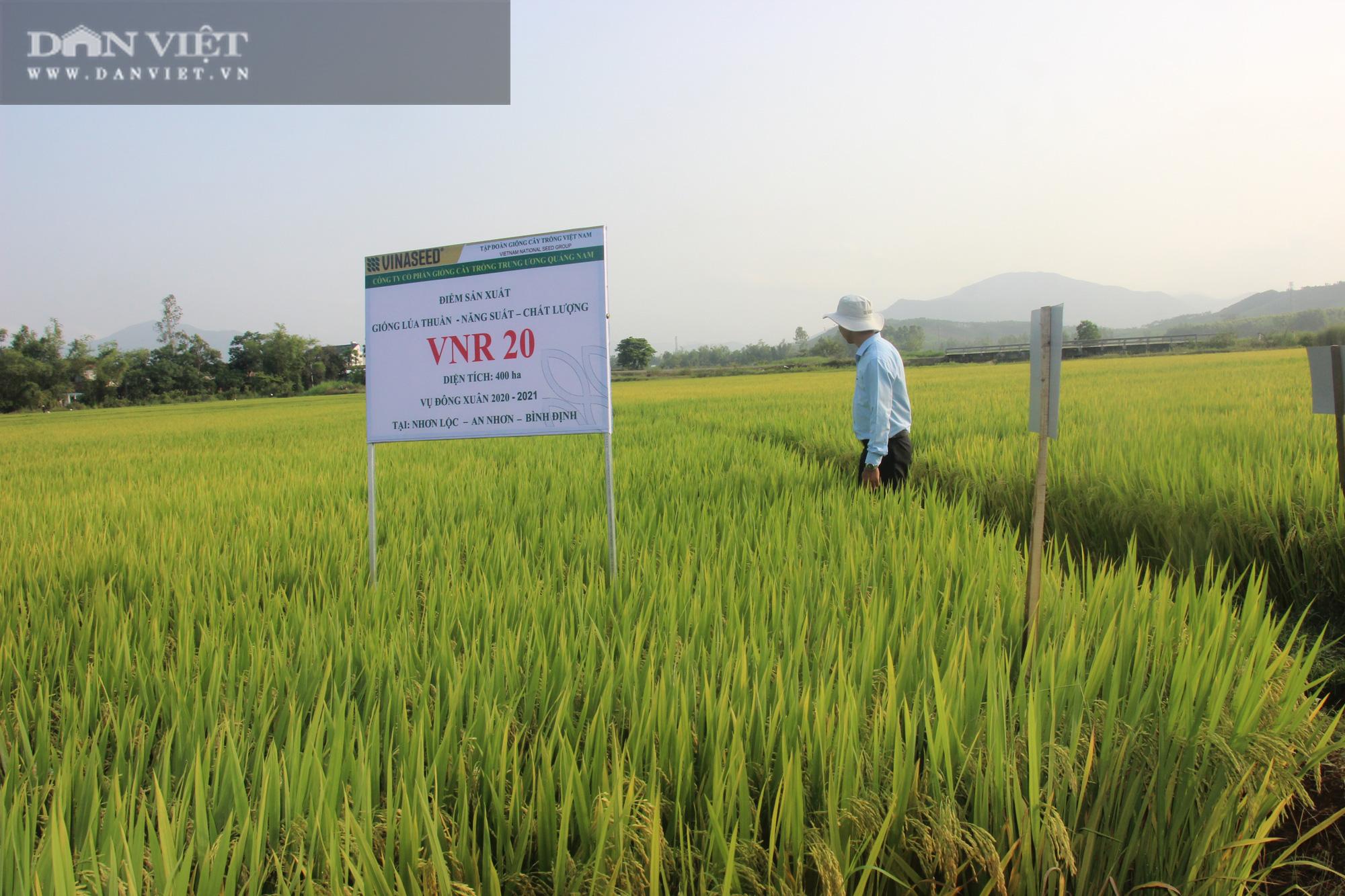 Bất ngờ trước hàng loạt giống lúa mới của VinaSeed trên vùng đất Bình Định - Ảnh 1.