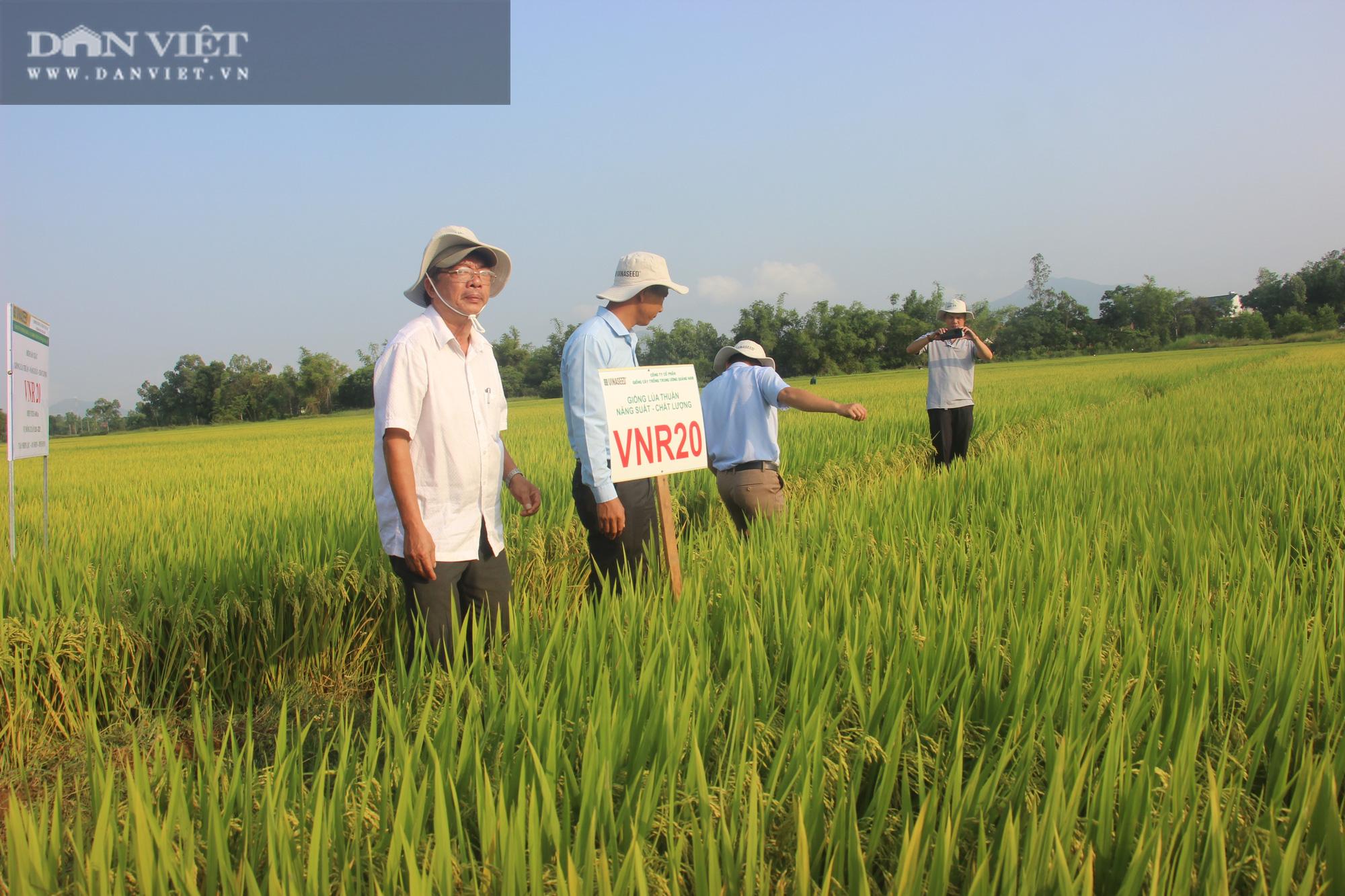 Bất ngờ trước hàng loạt giống lúa mới của VinaSeed trên vùng đất Bình Định - Ảnh 4.