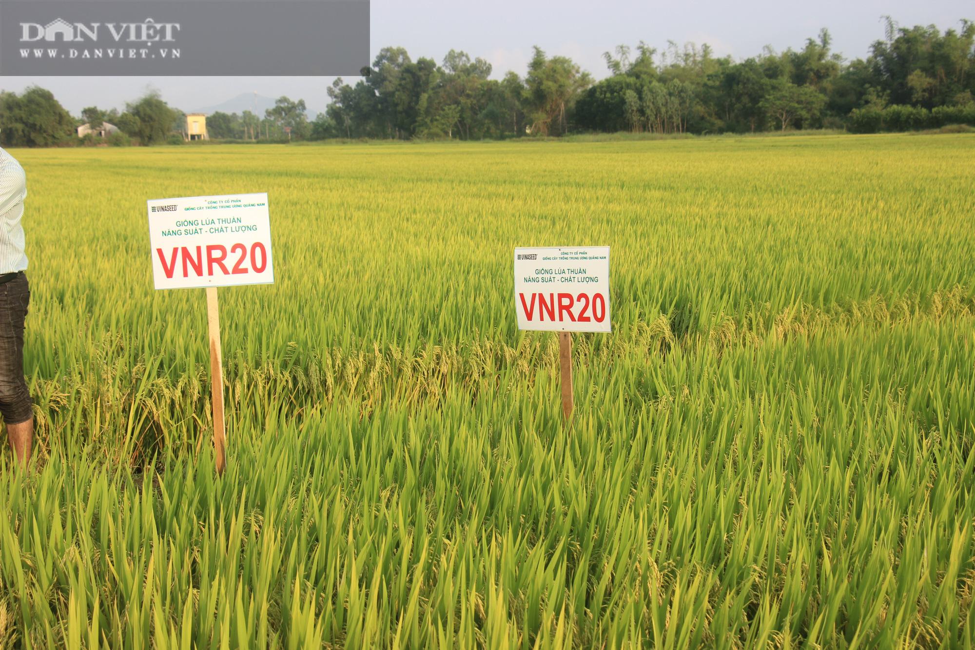 Bất ngờ trước hàng loạt giống lúa mới của VinaSeed trên vùng đất Bình Định - Ảnh 3.