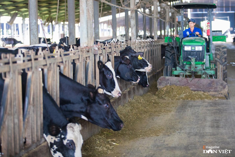 """Bò sữa ở Việt Nam: """"Hậu trường"""" quy trình chăn nuôi cầu kỳ và tỉ mỉ đáng ngạc nhiên    - Ảnh 12."""