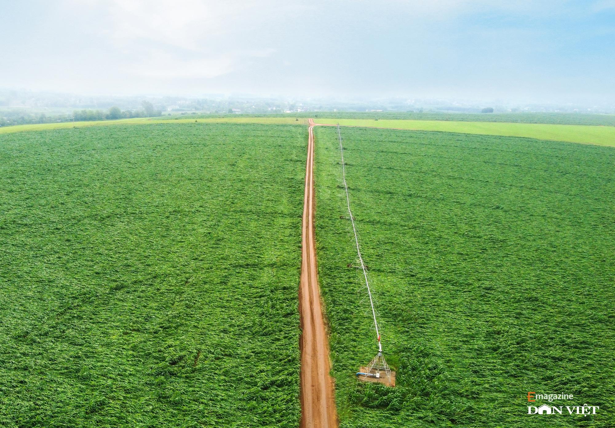 """Bò sữa ở Việt Nam: """"Hậu trường"""" quy trình chăn nuôi cầu kỳ và tỉ mỉ đáng ngạc nhiên    - Ảnh 1."""