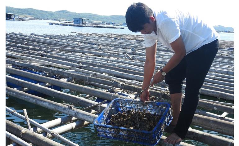 Phú Yên: Nuôi hàu giàu, nuôi ốc hương khá, nuôi 2 con trồng 1 cây trong 1 ao cũng hay, miễn là làm thế này - Ảnh 1.