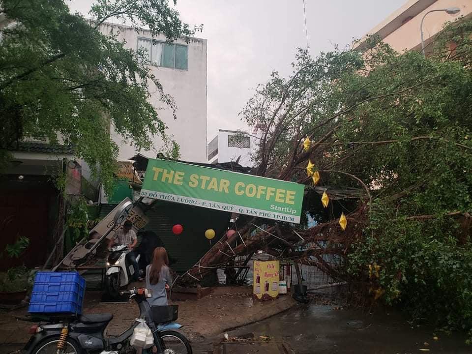 TP.HCM: Cây xanh gãy, bật gốc hàng loạt sau mưa lớn - Ảnh 1.