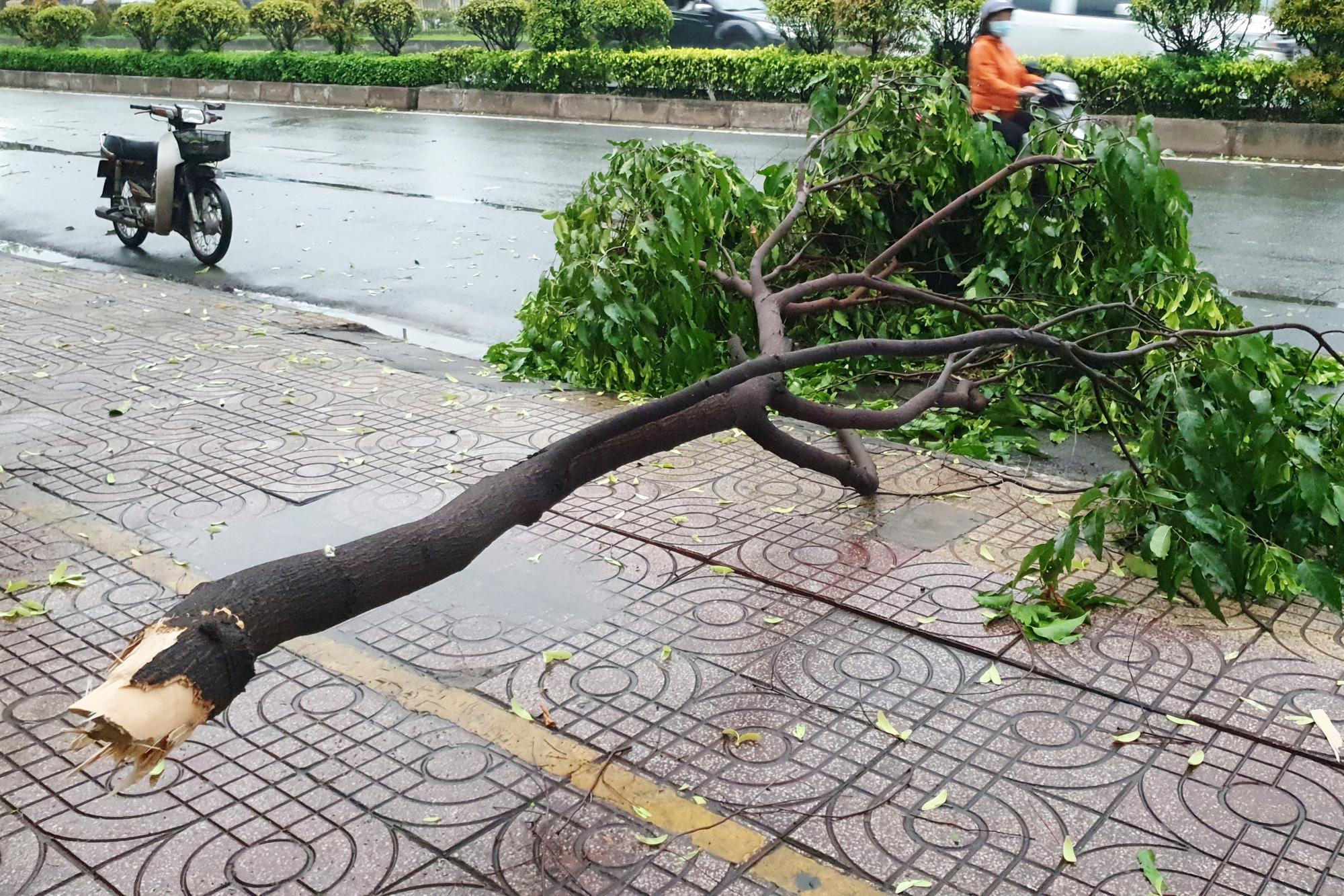 TP.HCM: Cây xanh gãy, bật gốc hàng loạt sau mưa lớn - Ảnh 2.