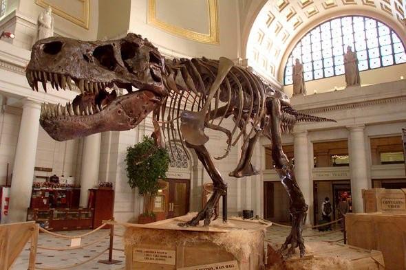 Bật mí về loài khủng long từng thống trị Trái đất? - Ảnh 4.