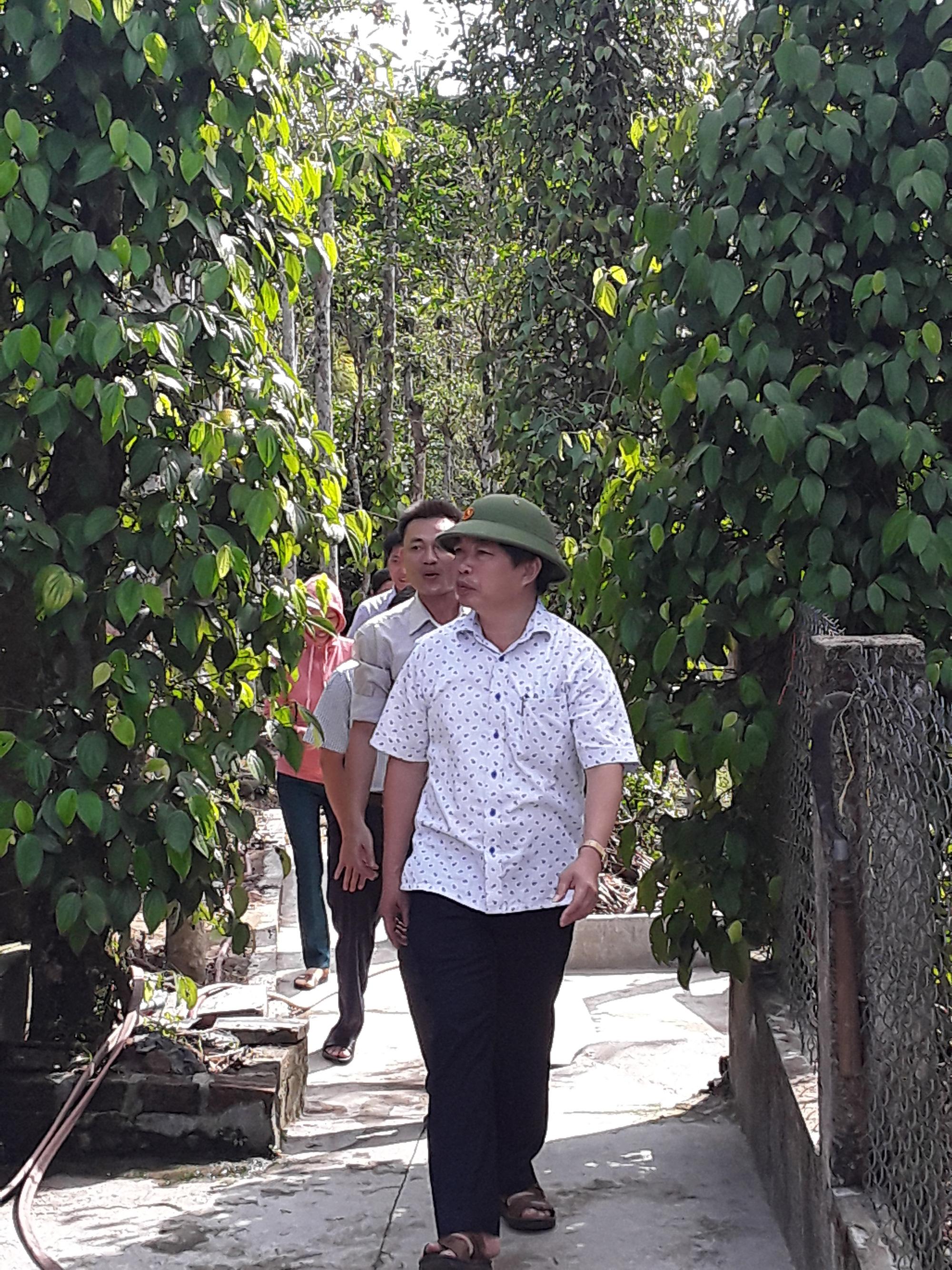 Quảng Nam: Tín dụng chính sách giúp người dân vững vàng phát triển kinh tế xã hội - Ảnh 4.