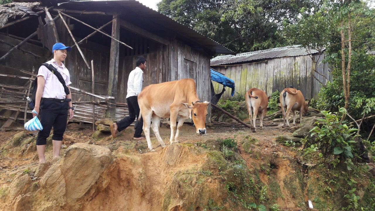 Quảng Nam: Tín dụng chính sách giúp người dân vững vàng phát triển kinh tế xã hội - Ảnh 2.